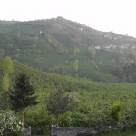 Family hazelnut farm in Ordu City in Spring time