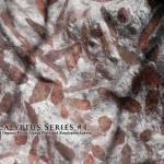 Eucalyptus Series #4